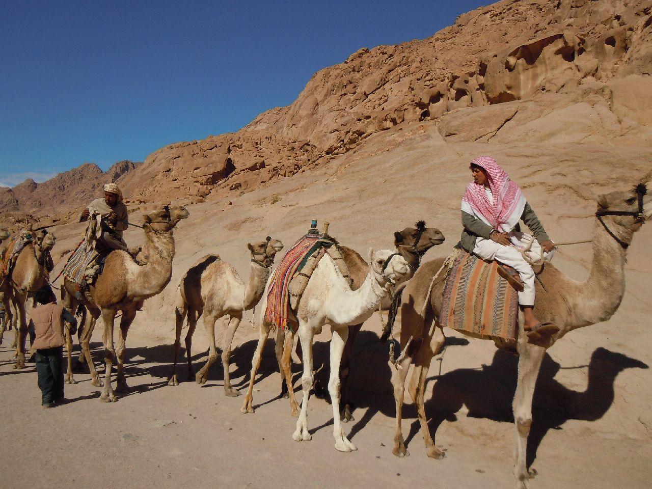 Beduini pe camile langa Muntele Sinai