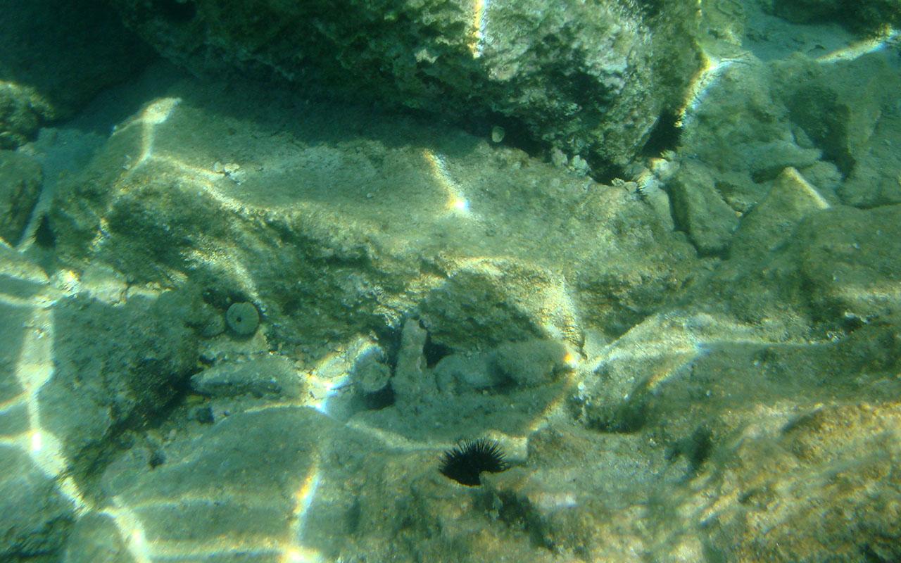 lumea-subacvatica