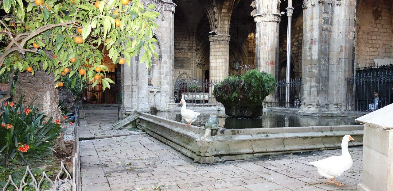 """Gradina din curtea interioara a Catedralei """"La Seu"""""""
