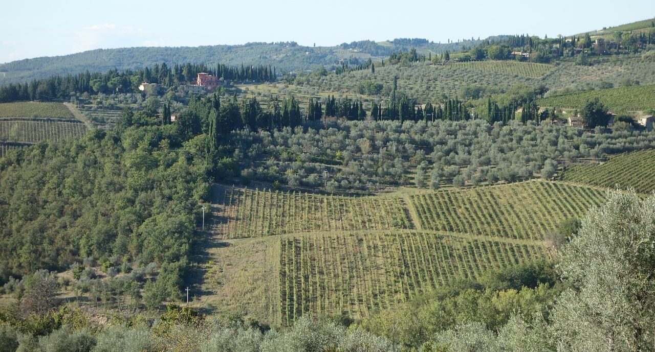 Podgorii in Chianti