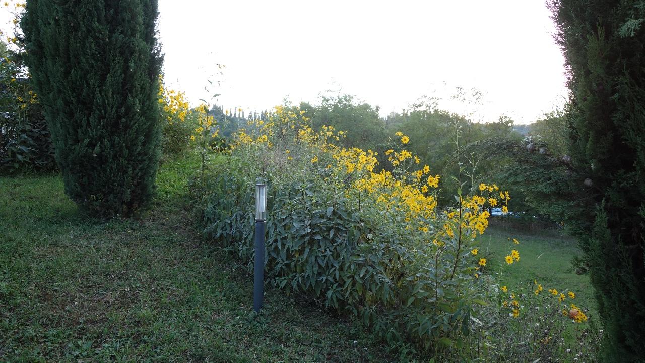 Florile din curtea vilei