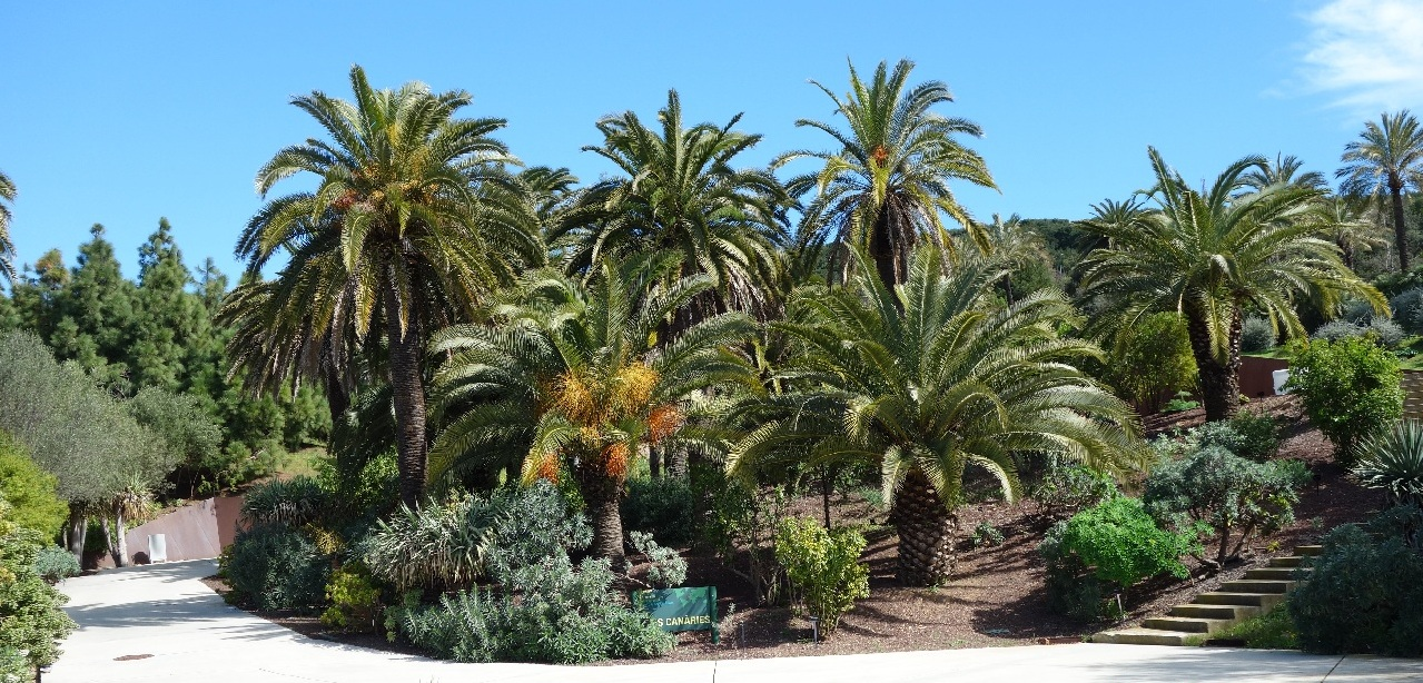 Vegetatie tropicala in Gradina Botanica din Barcelona