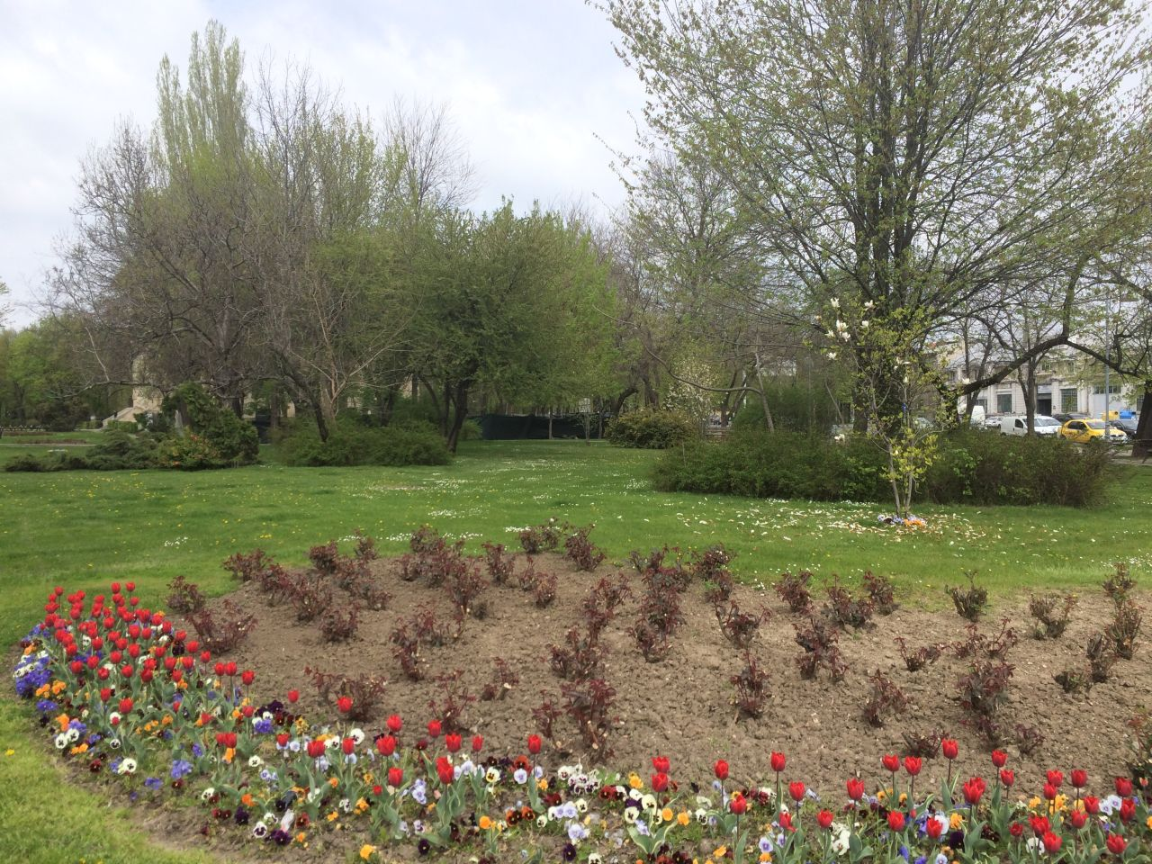 Flori in apropierea Pietei Victoria