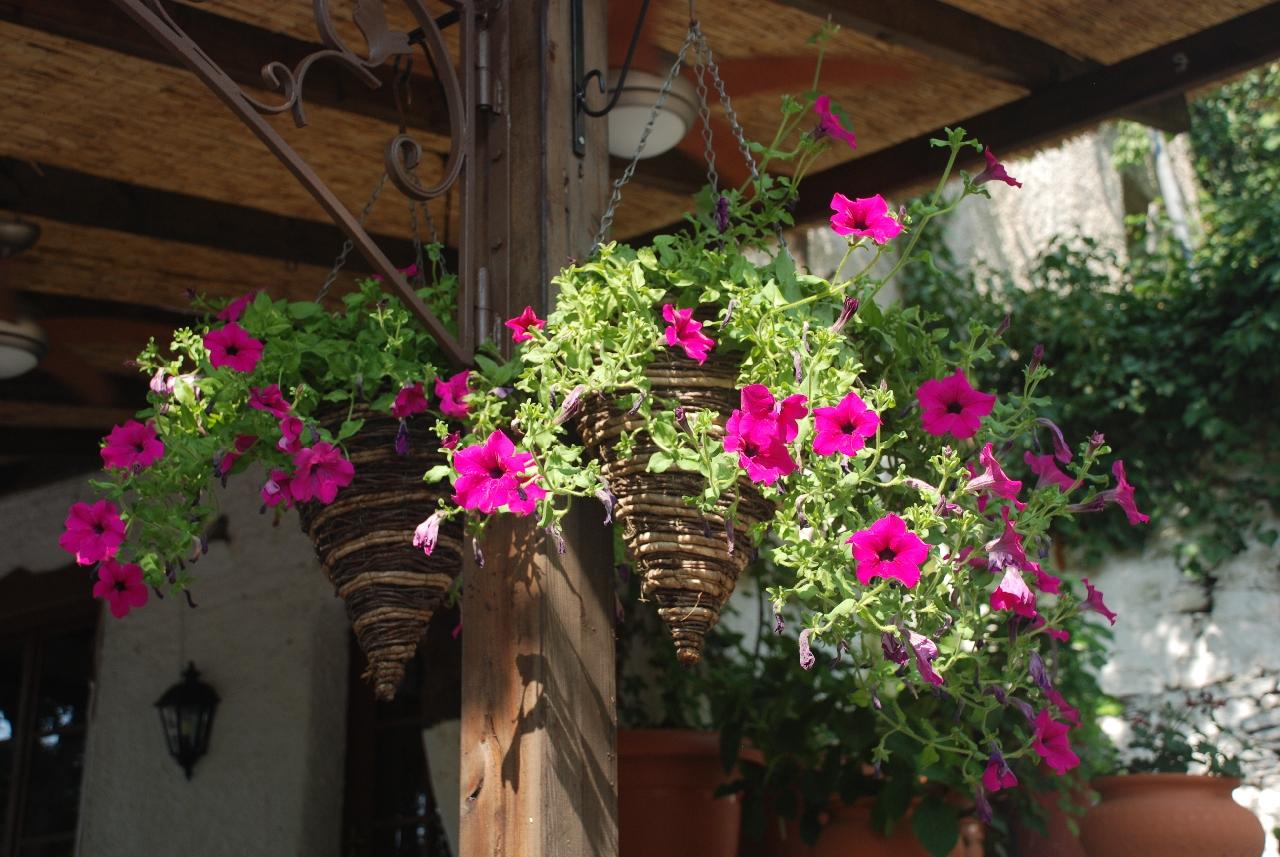 Flori in Kazaviti