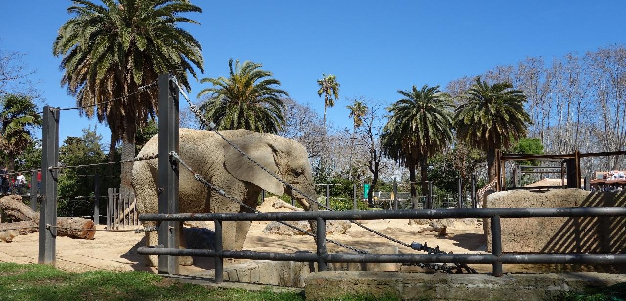 Bun venit la Zoo Barcelona!