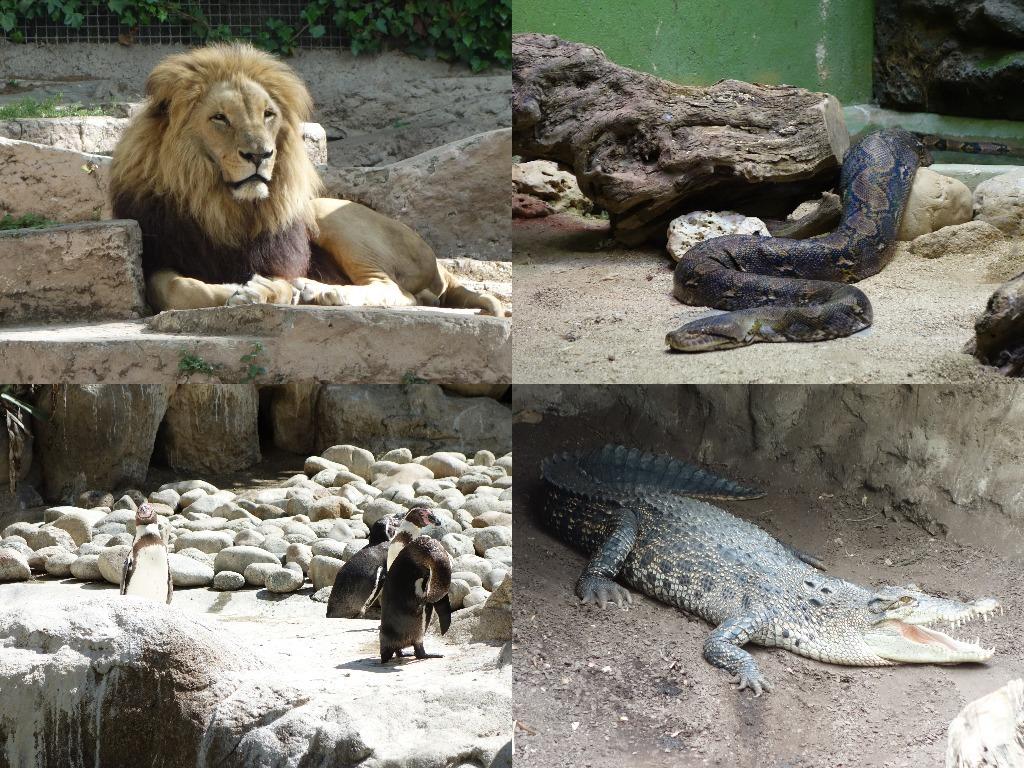 O parte din locatarii Gradinii Zoologice din Barcelona