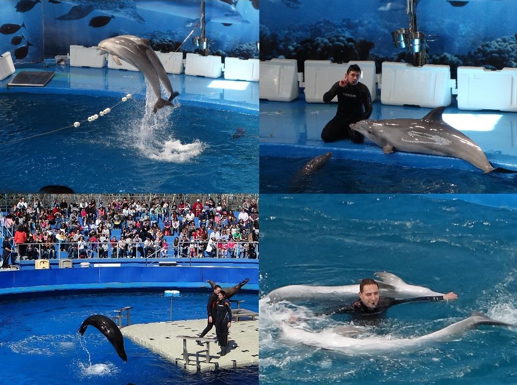 Show-uri cu delfini si foci