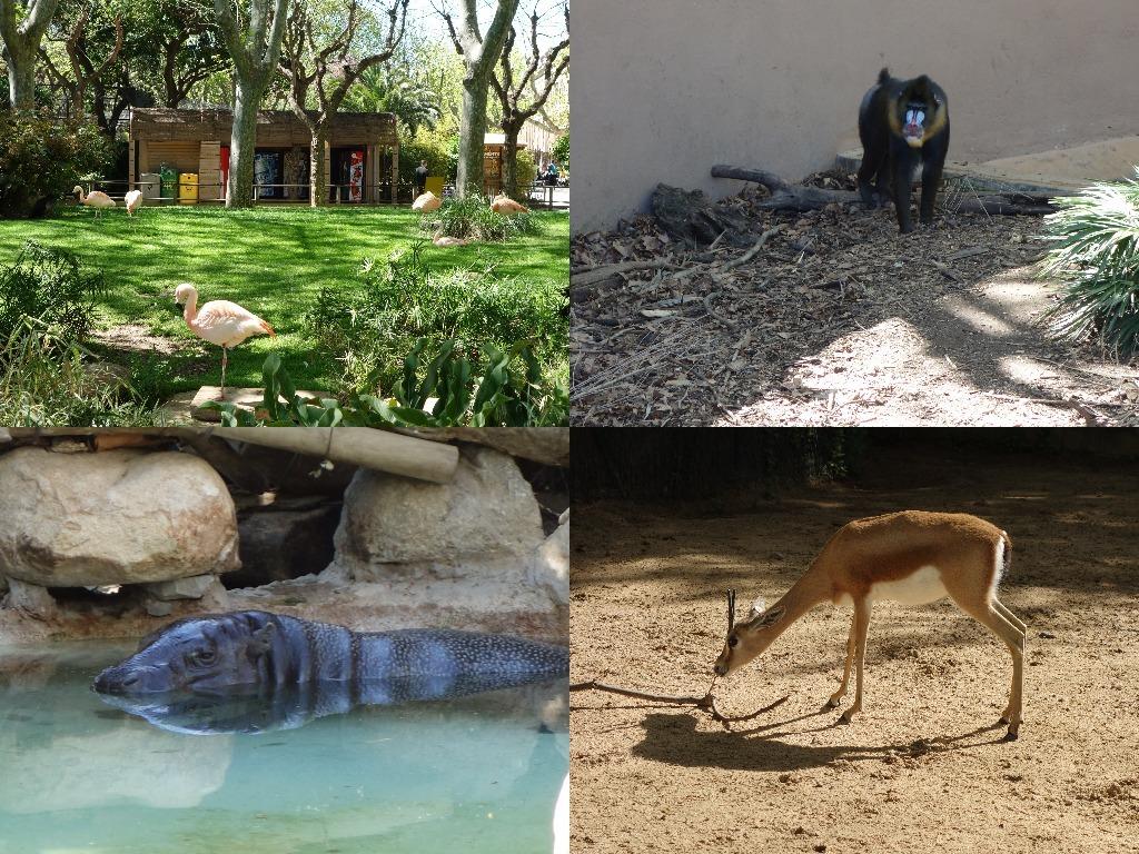 Animalele de la Zoo Barcelona