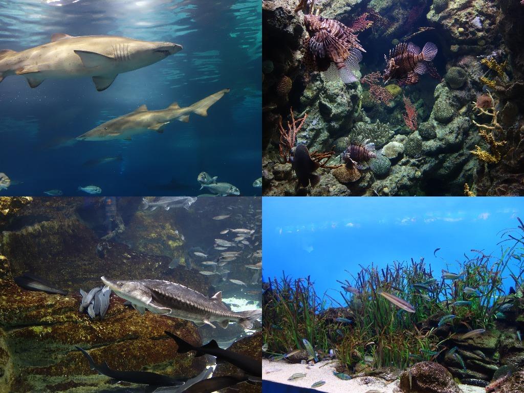 Selectie de pesti din Aquarium Barcelona