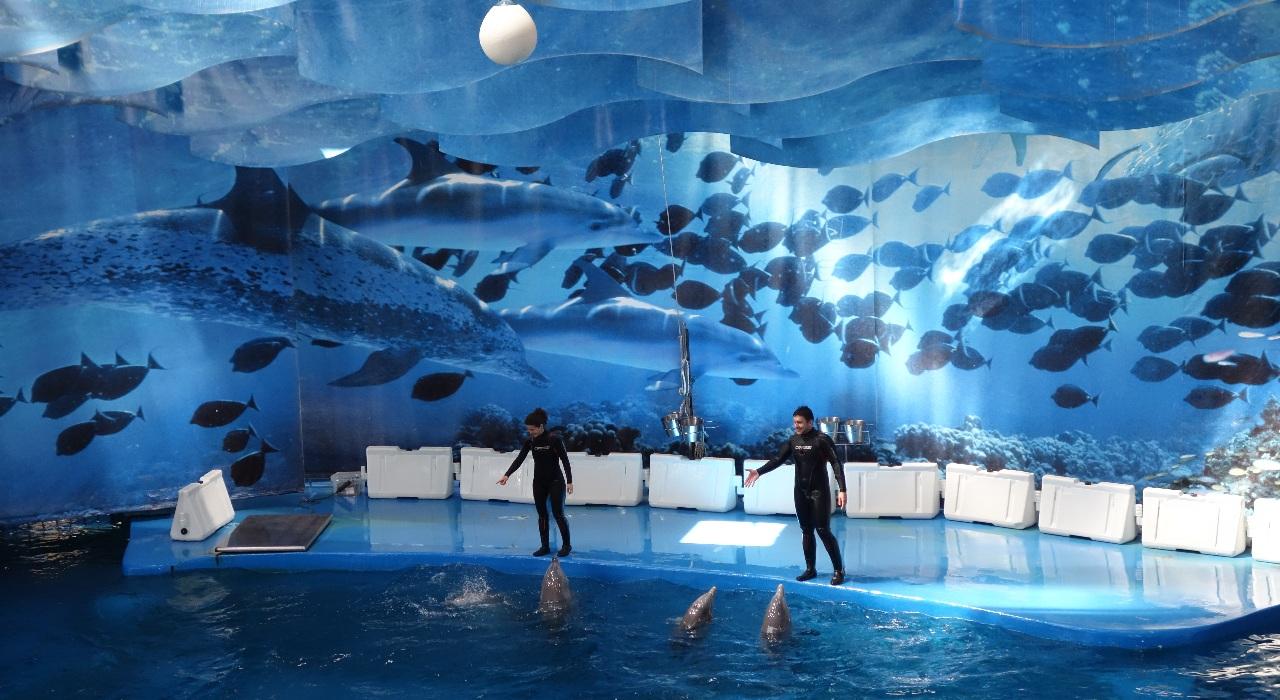 Show cu delfini la Zoo Barcelona