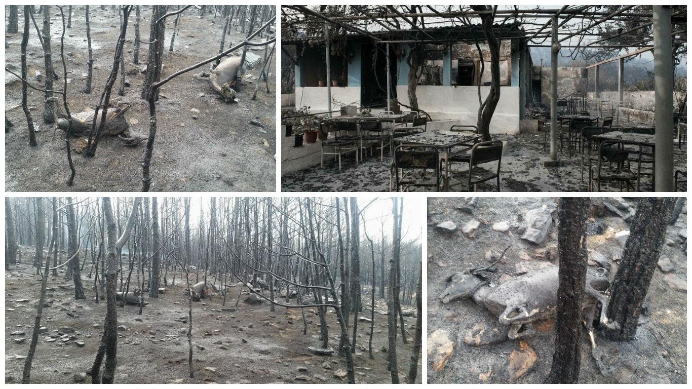 Situatia tragica din insula in a doua zi de incendii