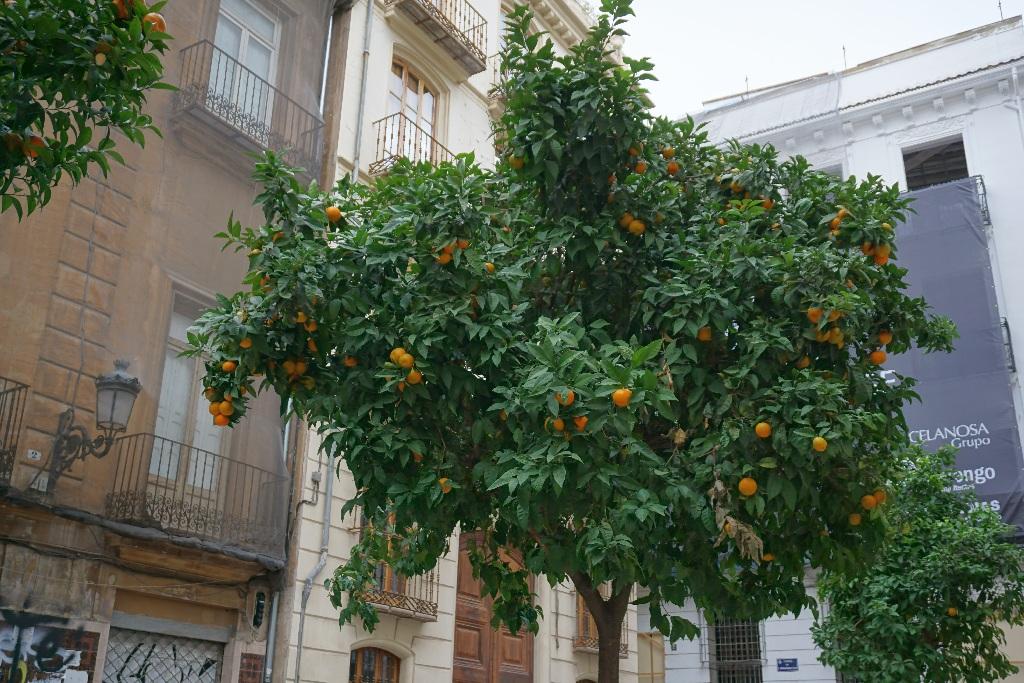 Valencia e plina de mandarini!!!